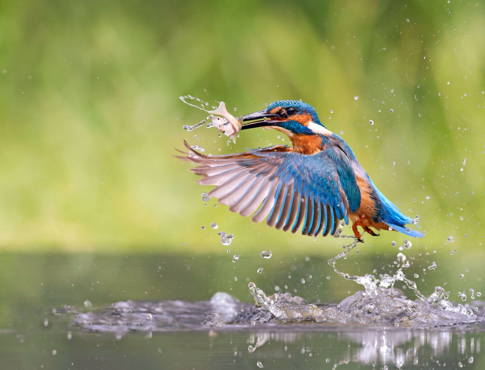 LandScape-magazine-Alamy-kingfisher-1.jpg