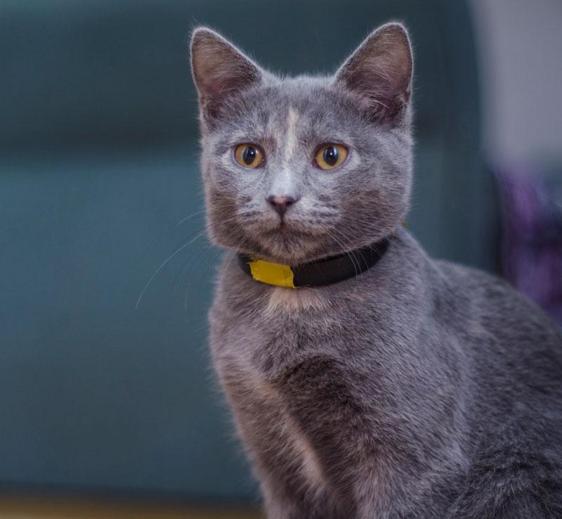 CAT SITTING SERVICE