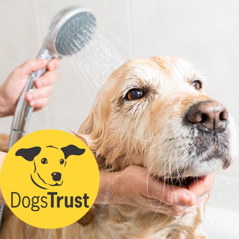 Woofs-a-daisy-dog-grooming.jpg