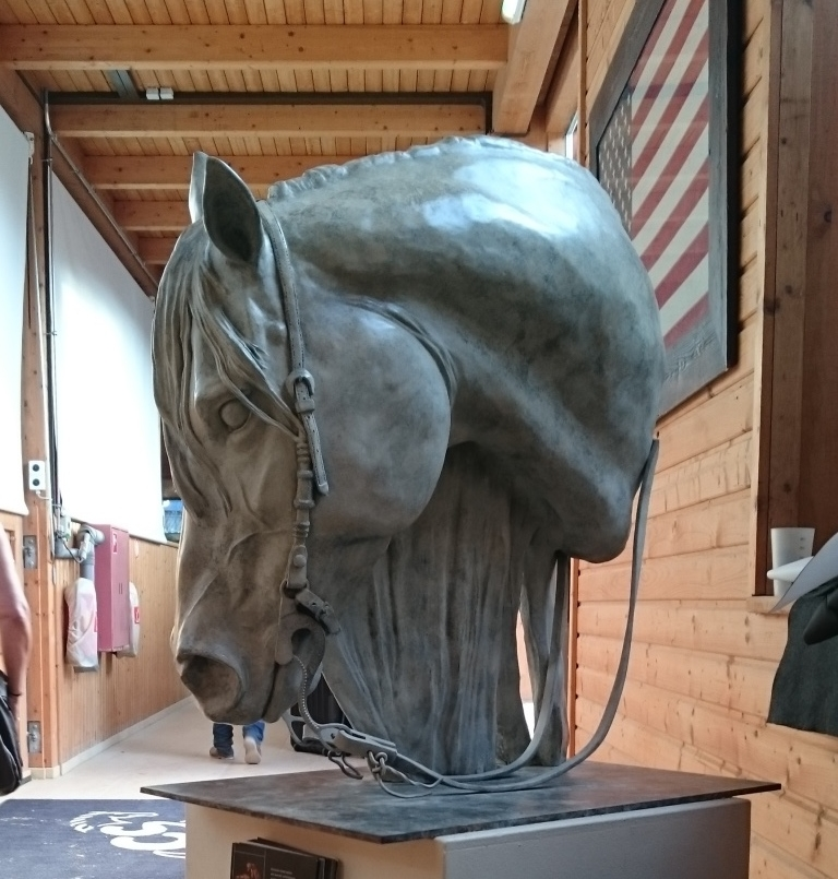 Reining Horse head.jpg