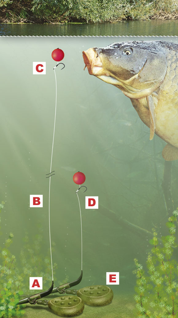 How To Tie A Zig Rig To Catch Carp Mid Water Angling Times