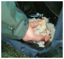 1. Mashed bread is a top feed for chub roving. Simply soak some stale bread in a bait bucket containing plenty water...