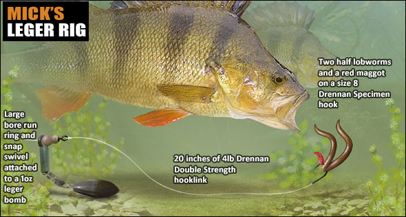 How to catch big perch angling times for Perch fishing lures