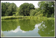 5. The rapidly growing carp are transferred to a freshly flooded fish farm pond where planktonic life will be blooming