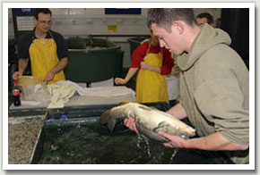 3. Once the final maturation process has been completed the fish are removed from their holding facility.