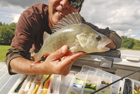 Try fishing with plastic baits to catch big perch for Where to buy fish bait near me