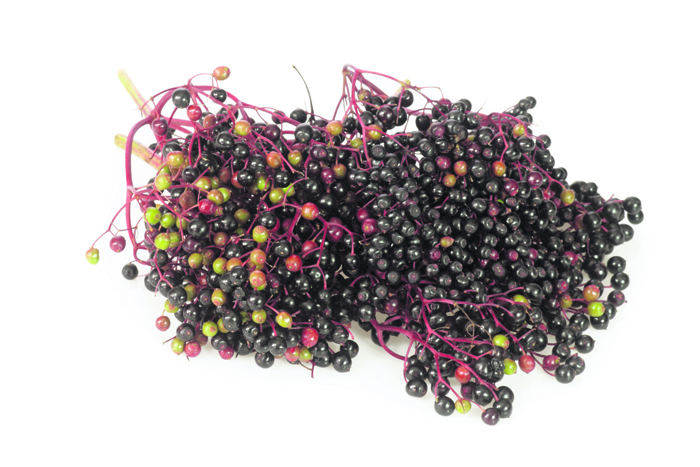 Elderberries.jpg