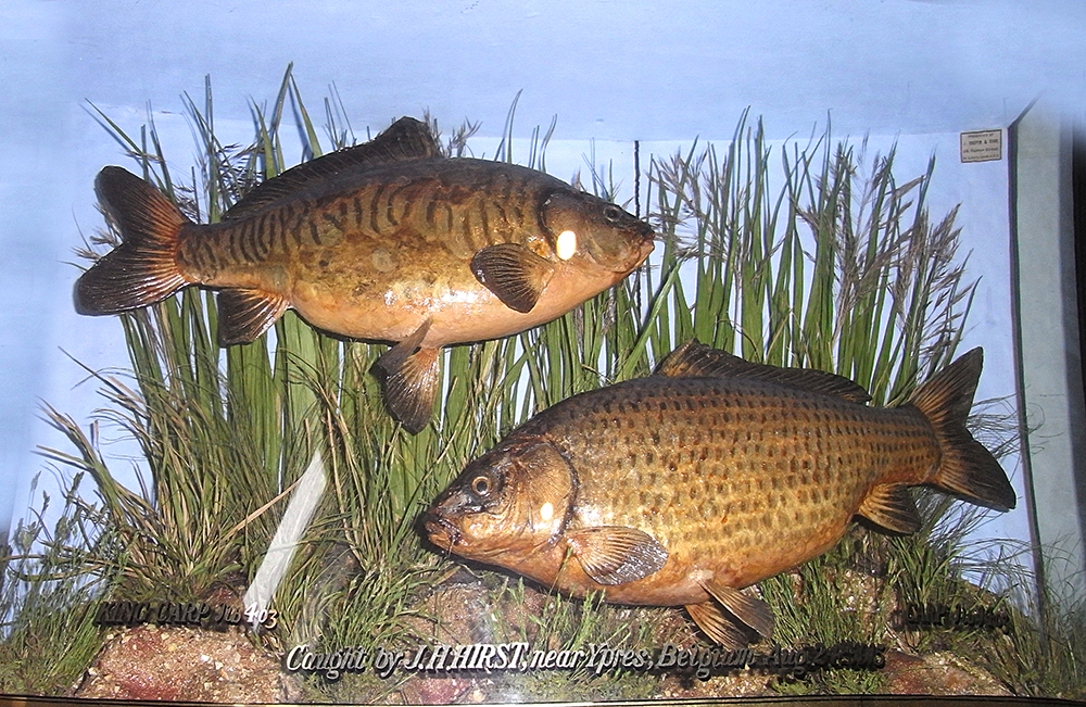 Hirst didn't let German sniper fire stand between him and a meal for his comrades – but these two carp ended up in a glass case.