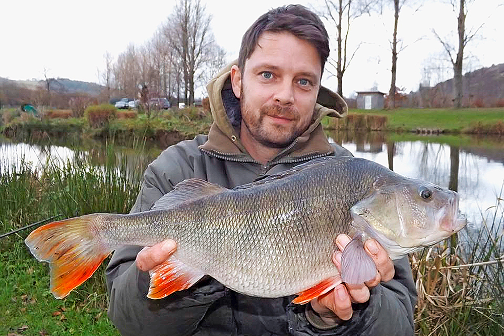 Nathan Phillips fished White Springs Fishery to land this 4lb 2oz perch.