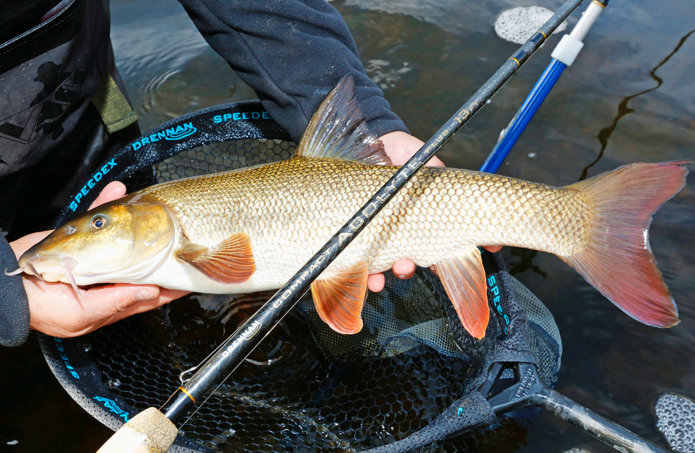 The Acolyte Plus easily handled chub and barbel