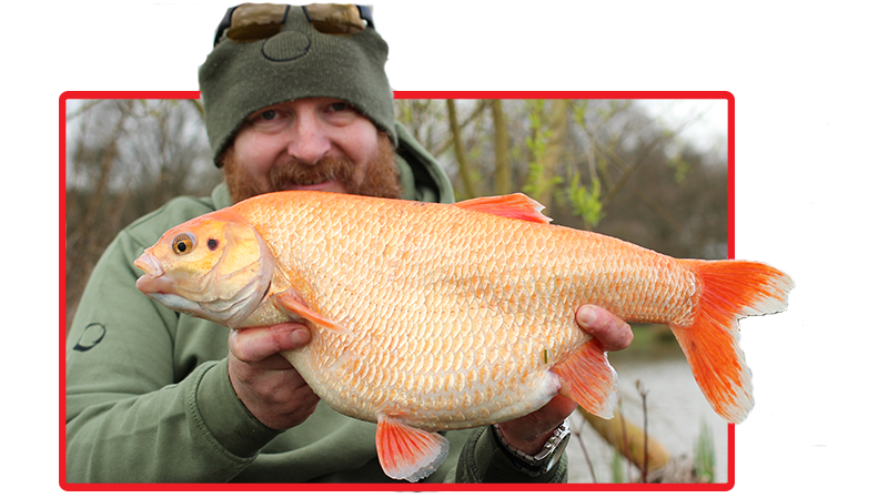 Mike Lyddon's 6lb 3oz 8dr golden orfe