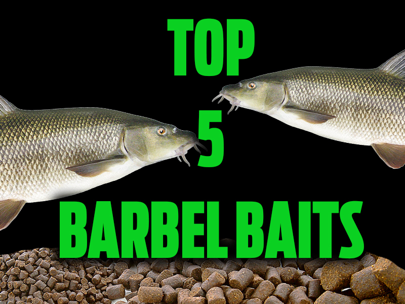 Top 5 barbel baits angling times for Where to buy fish bait near me