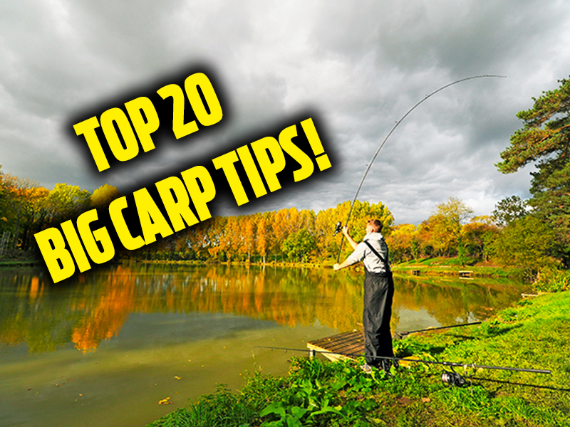 Top 10 pellet waggler tips angling times for Best fishing time today