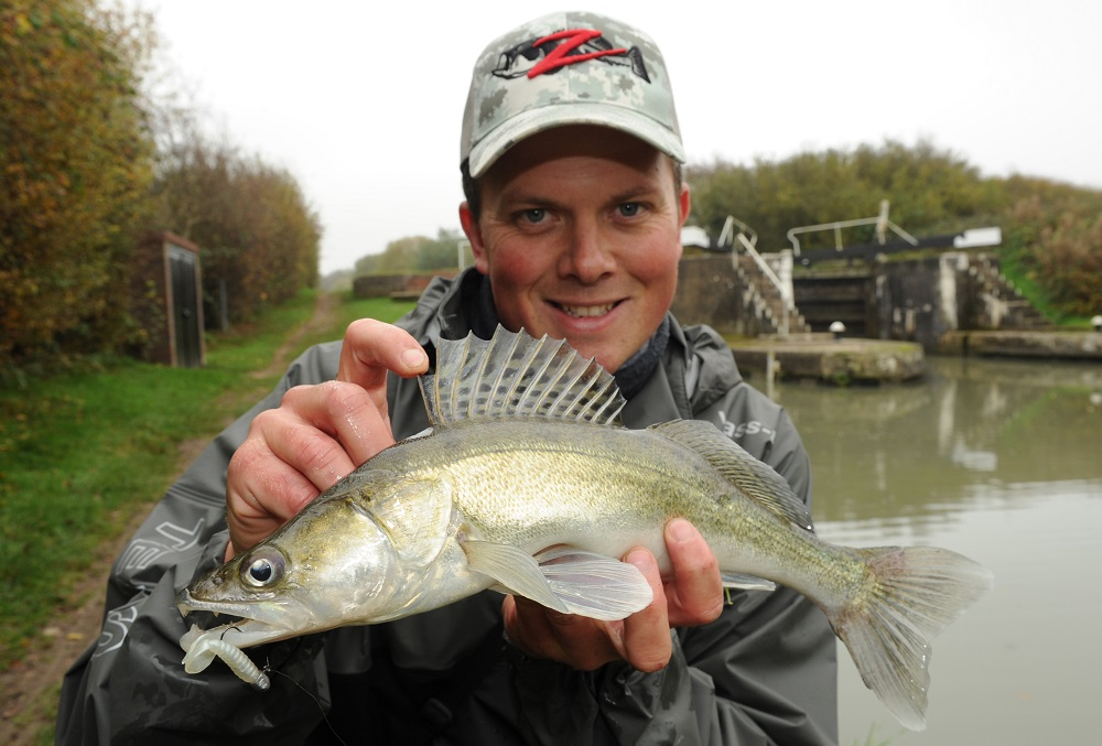 Fish like this zander are what to expect when drop shotting