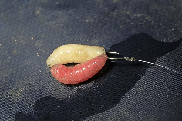 Best baits 1 Double maggots.jpg