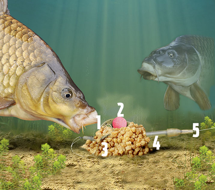 Carp pellet Method feeder rig.jpg
