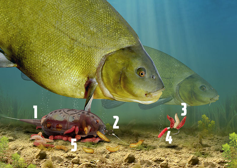 Tench maggot feeder rig.jpg