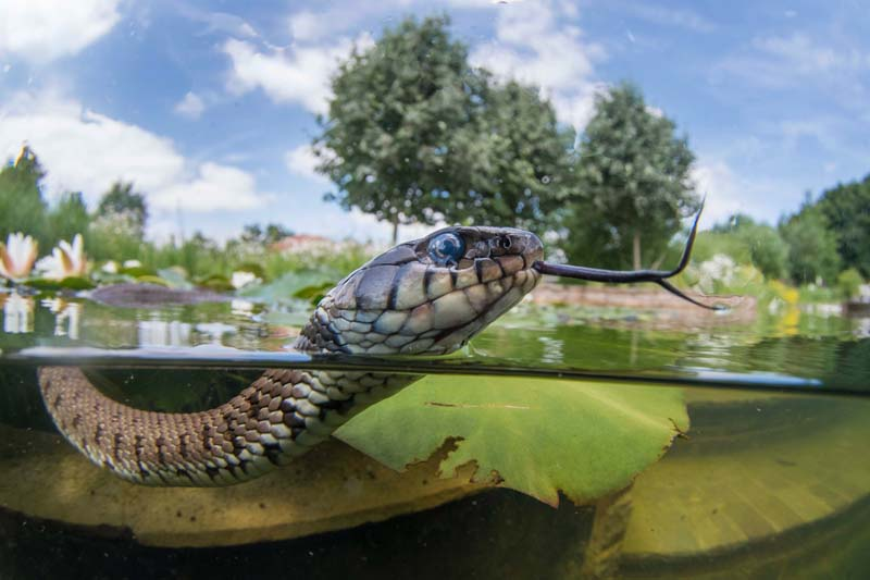 Jack_Perks_Aquatic_Wildlife - 1.jpg