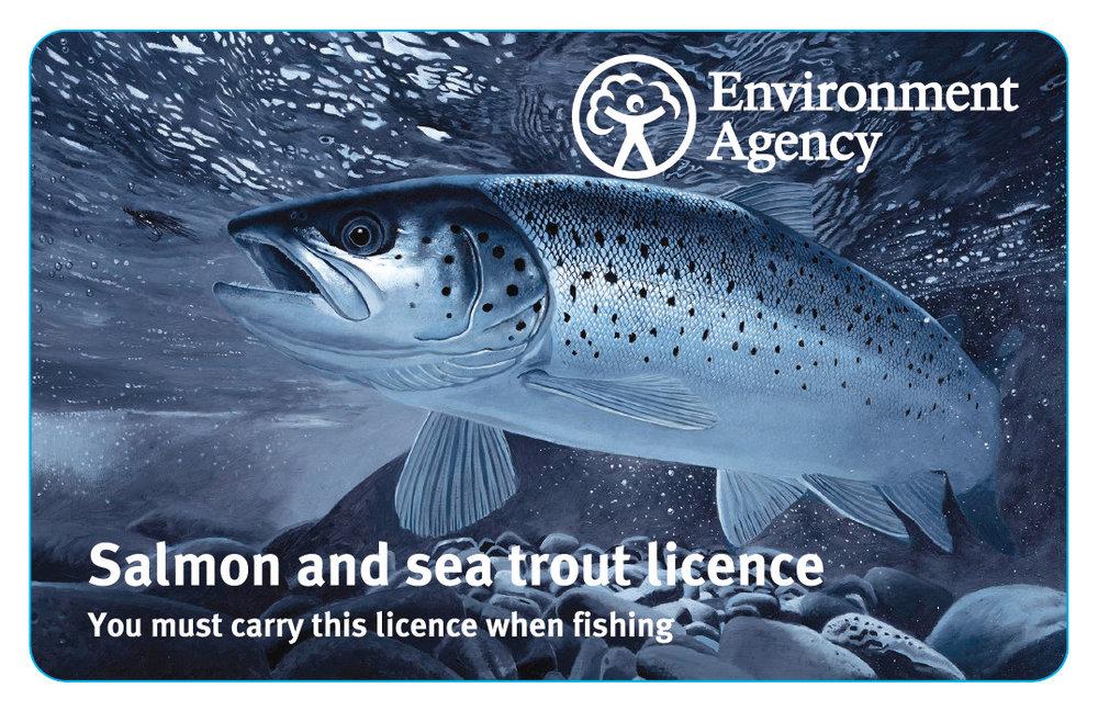 Salmon Sea Trout.jpg