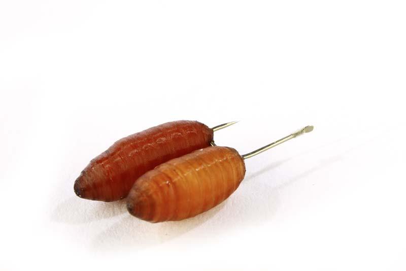 1 Small hooks for roach.jpg