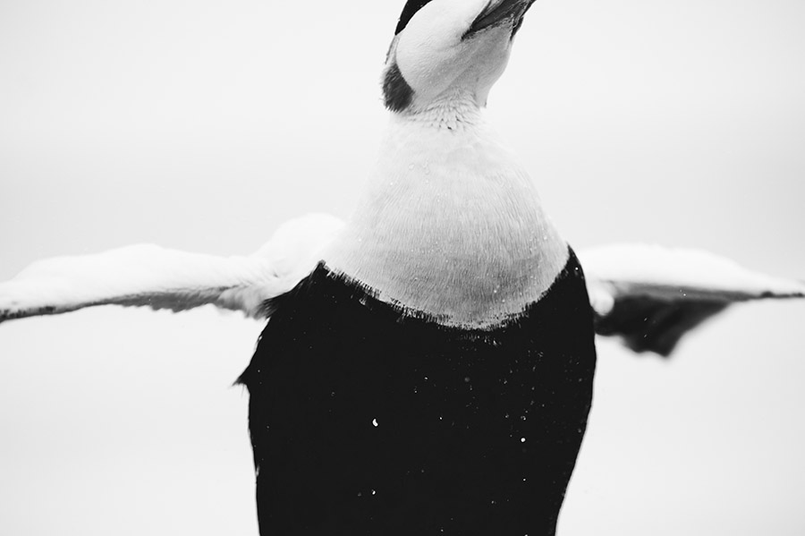 Tom_Mason_June 01, 2013-farnes2-_MAC1014.jpg