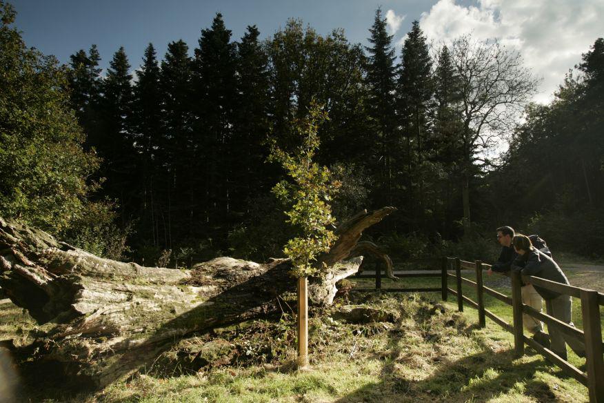 Salcey%20forest.jpg