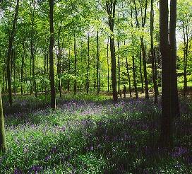 Herefordshire2.jpg
