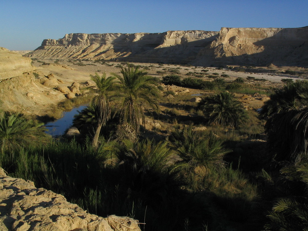 An%20oasis%20in%20the%20Omani%20desert%20by%20Hendrik%20Dacquin.jpg