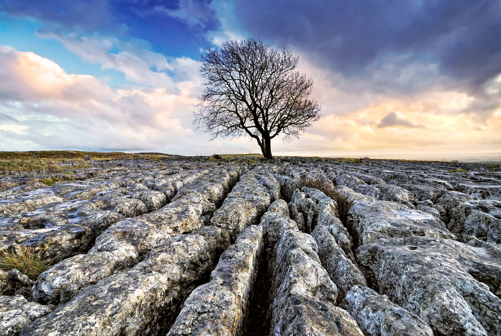 The Limestone Pavement of the Southwest Dales. Photo: Andy Aughey / Alamy