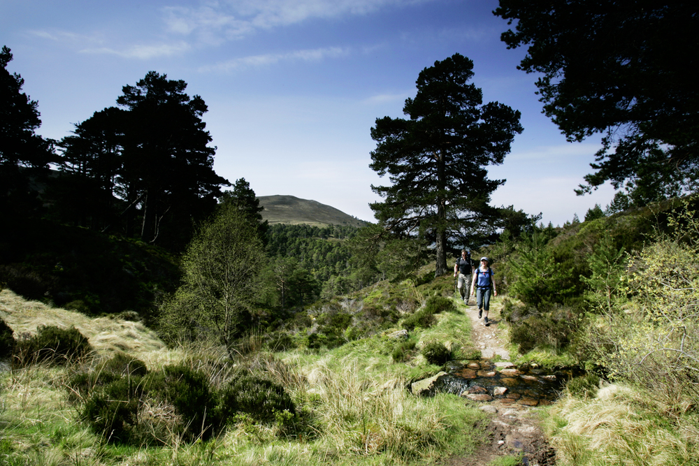 The beautiful paths of the Rothiemurchus Forest. Photo: Tom Bailey / Trail Magazine