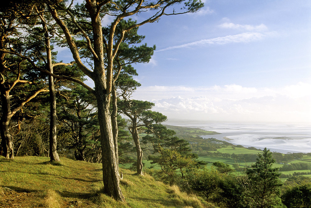 Arnside Knott B8PP04 The National Trust Photolibrary _ Alamy.jpg