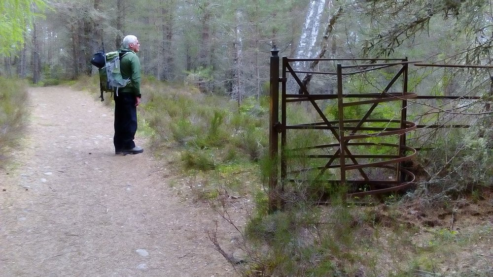 Carole Rodgers' walking partner couldn't bring himself to look at this abomination on Rothiemurchus estate.