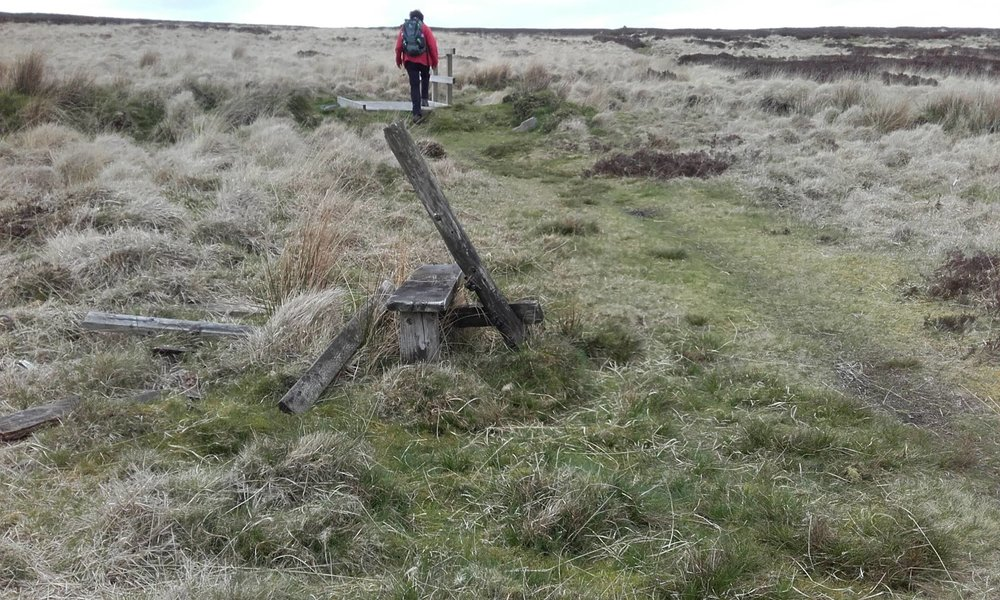 Beth Costin spotted a stile in its dying moments at Ogden water.