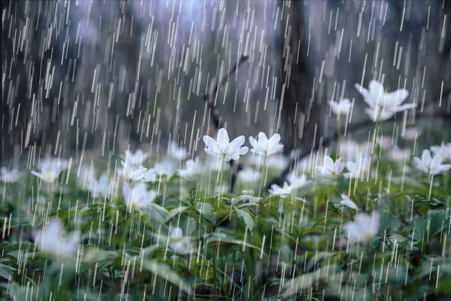 raindrops-plants-smell.jpg.653x0_q80_crop-smart.jpg