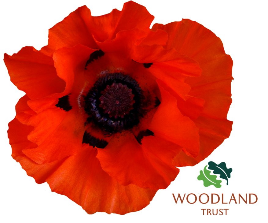 poppy_png_by_jeanmaryanne-d6e5u9m.png