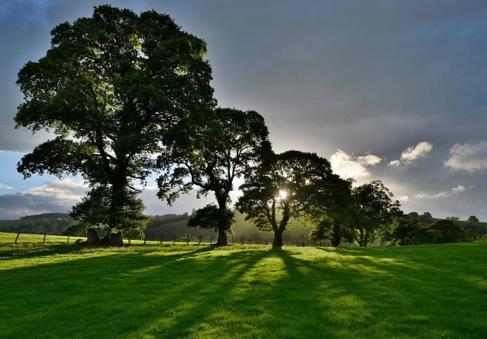 Sometimes simple is good - sun through the trees near Pooley Bridge