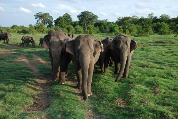 10-Sri-Lanka.jpg