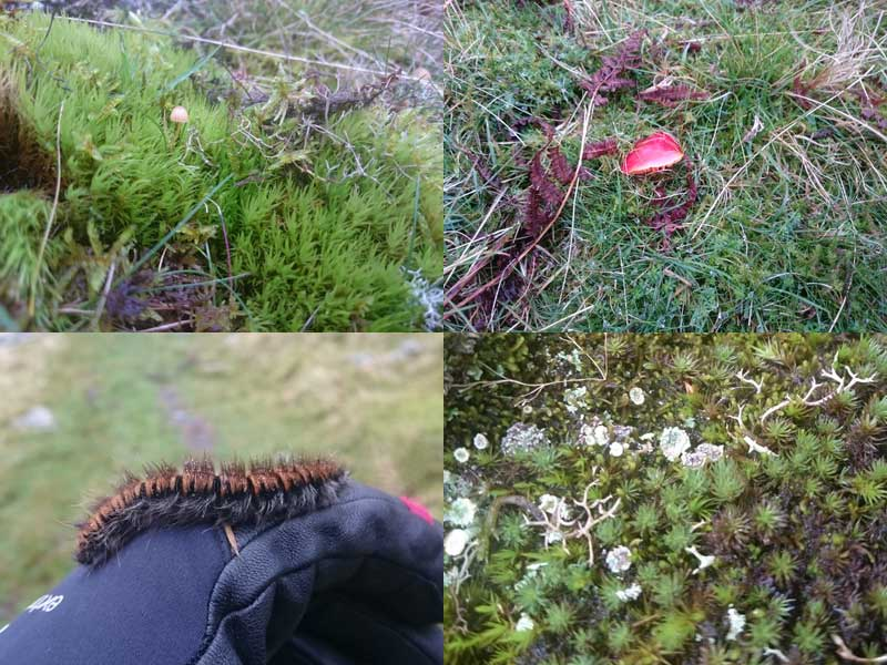 Some of the fells' smaller flora and fauna.