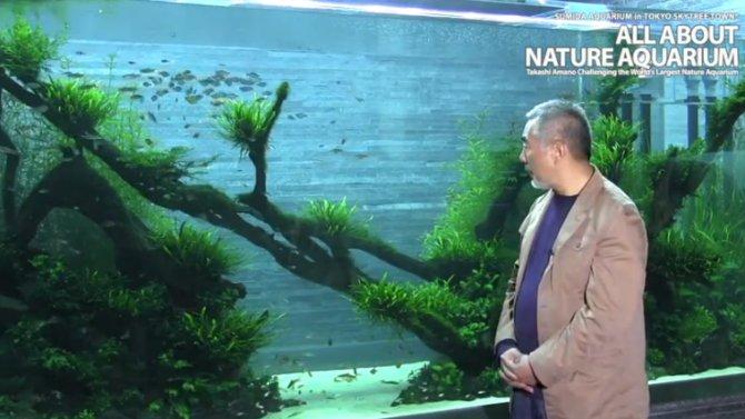 Aquascaping Pioneer Takashi Amano Dies Practical Fishkeeping Magazine