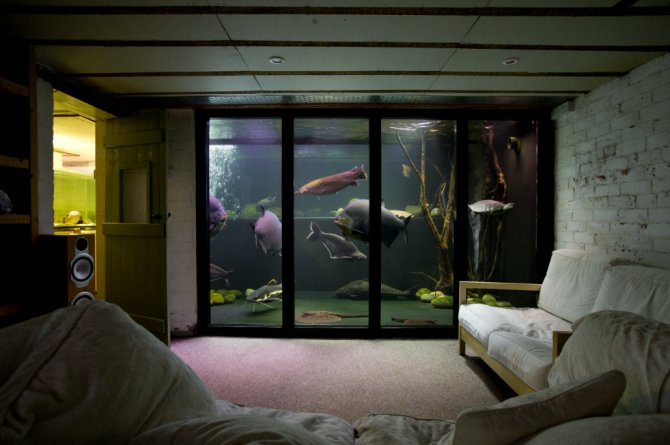 Uk s biggest private freshwater tank is closing down for How to build a large fish tank