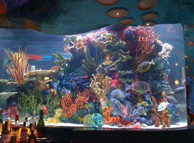 Video giant aquarium breaks at downtown disney restaurant for Disney fish tank