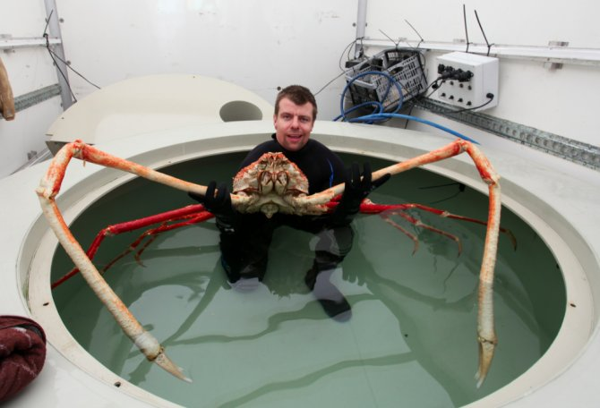 Meet the biggest crab in Britain! — Practical Fishkeeping ...