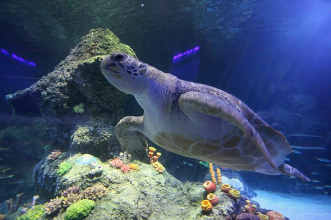 New Sea Life Centre opening in Manchester ? Practical Fishkeeping ...