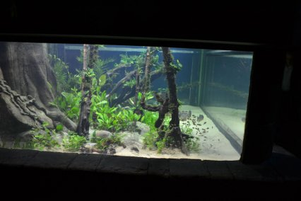 Awesome The Original Design Brief Was To Create A Biotopically Correct Aquascape  For The Piranha Species Residing In The Tank, Using Both The Right Fish And  Plants ...