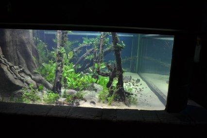 London sea life piranha tank gets an aquascaping makeover for Piranha fish tank
