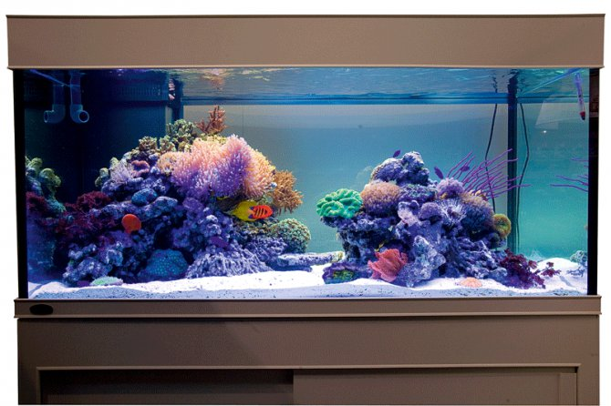 Inspirational Aquariums Medium Sized Reef Tank
