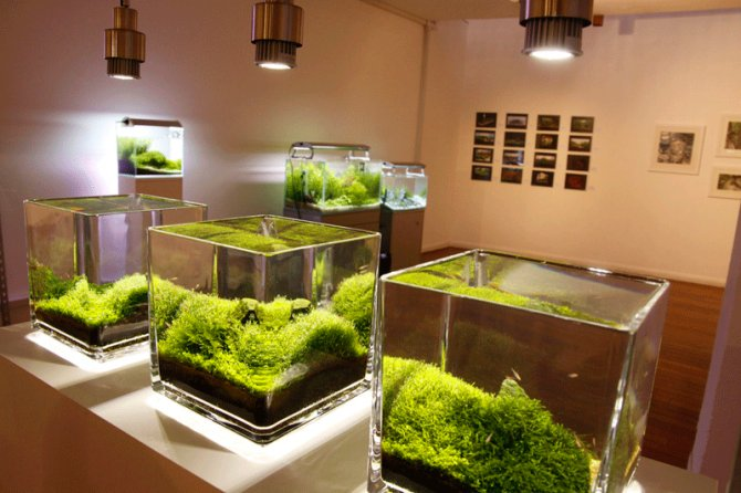 Delightful Live Aquascapes At Art Gallery Deemed U0027a Successu0027 U2014 Practical Fishkeeping  Magazine