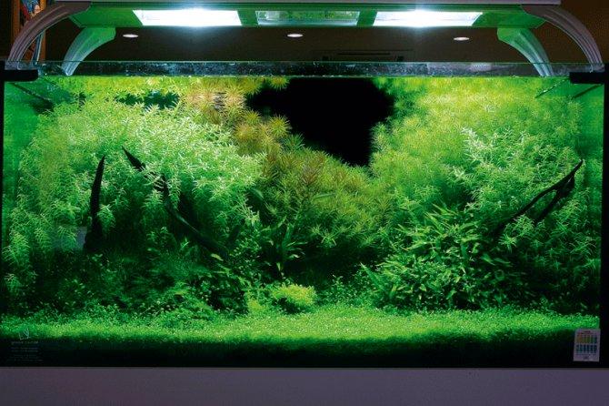 Inspirational aquariums: Posh nature aquarium ? Practical ...