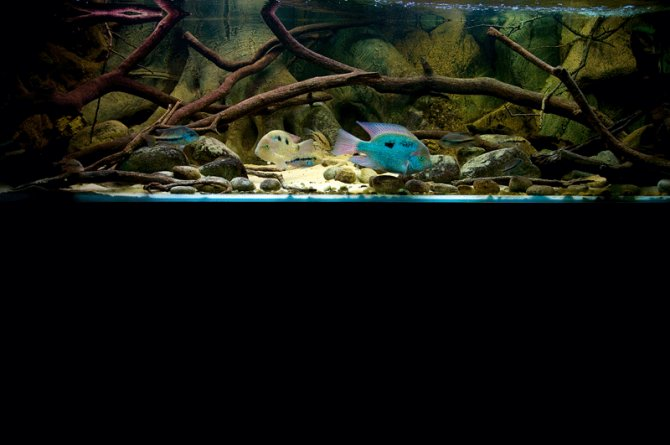 Your Tanks Lee Nuttall Part Two Practical Fishkeeping Magazine