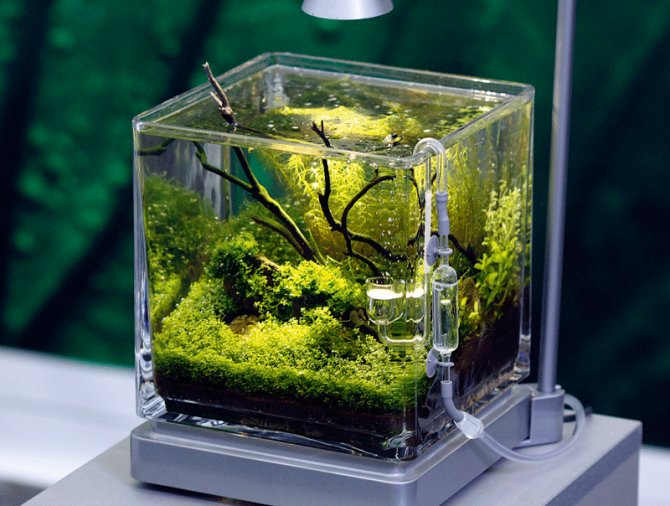 Inspirational Aquariums Planted Pico Practical